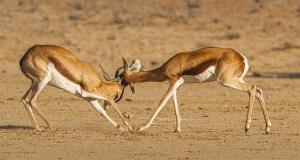 Pourquoi opter pour un safari en Namibie